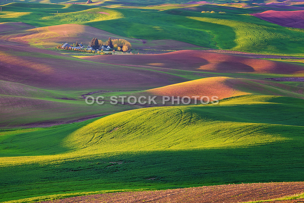 The Colors of Palouse Washington