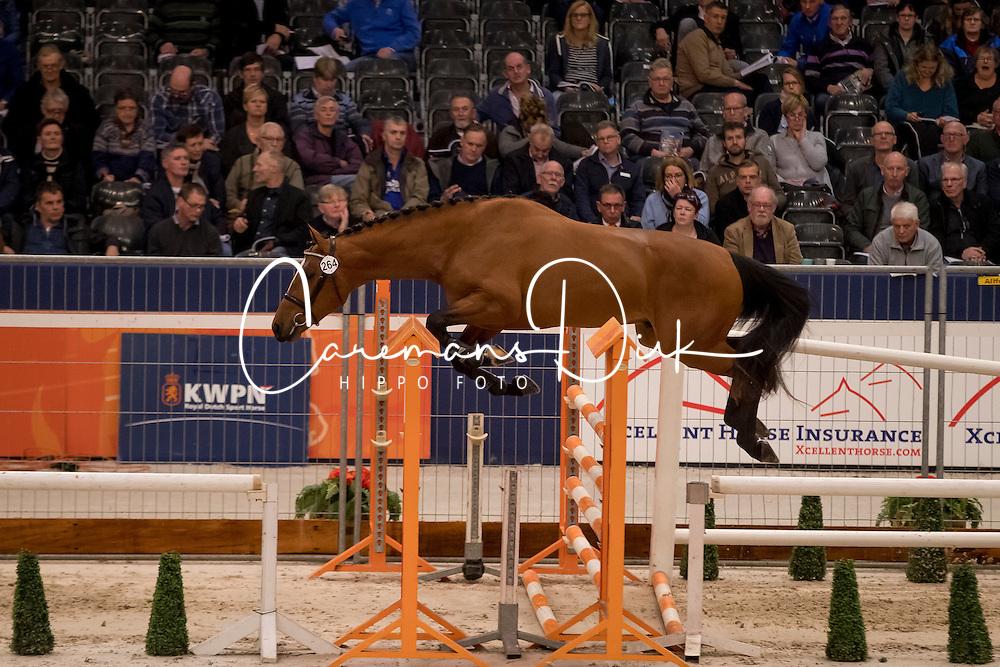 264 - Jumper Verdi<br /> KWPN Hengstenkeuring 2017<br /> © Dirk Caremans<br /> 01/02/2017