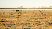 El Ombú de Areco