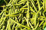 grüne Bohnen, Hessen, Deutschland | green beans, Hesse, Germany