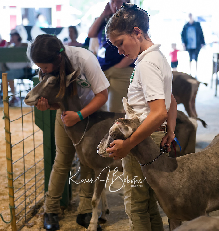 """Lila Smith with """"Toga"""" and Ashley Higgins with """"Winlo""""  wait their turn to show their 3-5 year Toggenburgs during the 4H Fair at the Belmont Fairgrounds on Saturday.  (Karen Bobotas/for the Laconia Daily Sun)"""