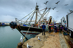 Landing a catch of fresh fish at the harbour in Essaouira, Morocco<br /> <br /> (c) Andrew Wilson | Edinburgh Elite media