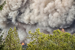 September 12, 2015 - Lake County, California, Flames towering over mature trees as the Valley Fire races through Boggs Mountain State Forest near Loch Lomond (Kim Ringeisen / Polaris)