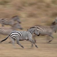 Maasai Mara' 18
