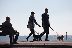 © Licensed to London News Pictures. 02/10/2016. Southsea, Hampshire, UK.  A couple walking their dogs along Southsea Promenade and enjoying the warm, sunny weather on another stunning autumn day. Photo credit: Rob Arnold/LNP