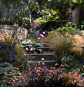 Los Angeles, California: flowers and native plants in the yard of Elysian Landscapes' Judy Kameon, include Salvia sinalonesis, Verbascum bombyciferum (Artic Summer) and Verbena bonariensis on the left; and Stipa tenuissima and Asparagus desniflorus 'Meyersii' on the right. (photo: Ann Summa).