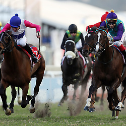 MARINARESCO (Jockey) Bernard Fayd'Herbe (Trainer) Candice Bass-Robinson during RACE 7 THE VODACOM DURBAN JULY (Grade 1) - 2200m – R4 250 000 at THE VODACOM DURBAN JULY at Greyville Racecourse in Durban, South Africa on 1st July 2017<br /> Photo by:  Steve Haag Sports