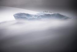 Antarctic Shag (Leucocarbo bransfieldensis) on iceberg in Antarctica.