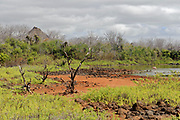 Brackish lakes and vegetation at Dragon Hill, Santa Cruz, Galapagos. In the background is Dragon Hill.