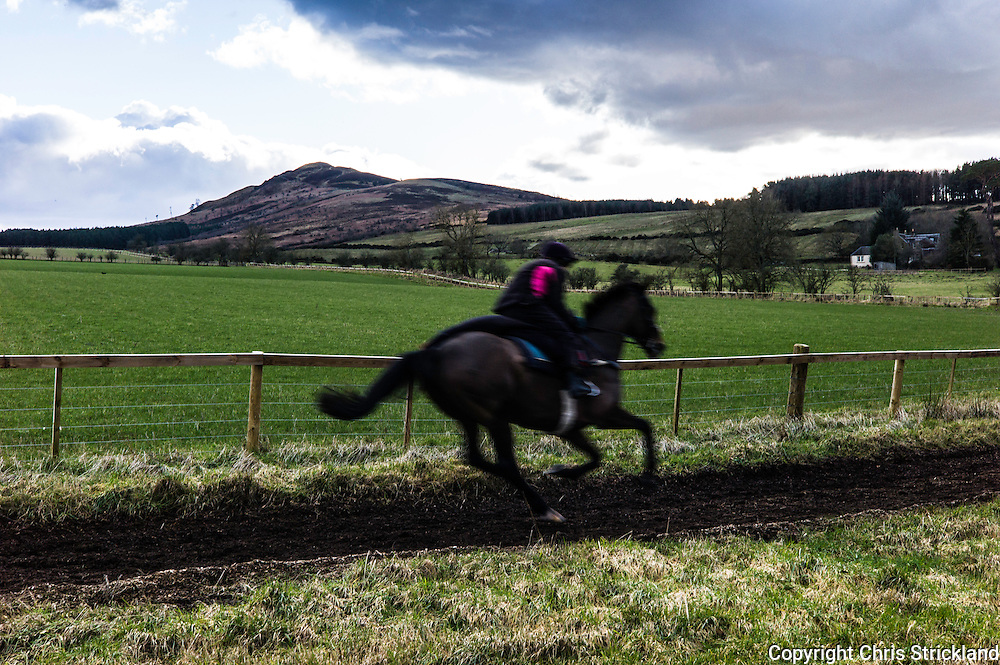 Denholm, Hawick, Scottish Borders, UK. 23rd February 2016. Trainer Di Walton puts Point to Point racehorse Oscar Stanley through his paces on the gallops with Ruberslaw hill as a backdrop.