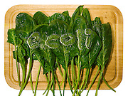 """E. coli"" is digitally superimposed into leaves of spinach on a cutting board. E.coli is an intestinal bacteria and can often end up on foods due to improper washing at factory farms."