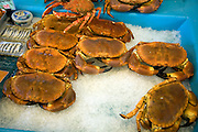 Fresh crabs on ice, St Peter Port, Guernsey, Channel Islands, UK