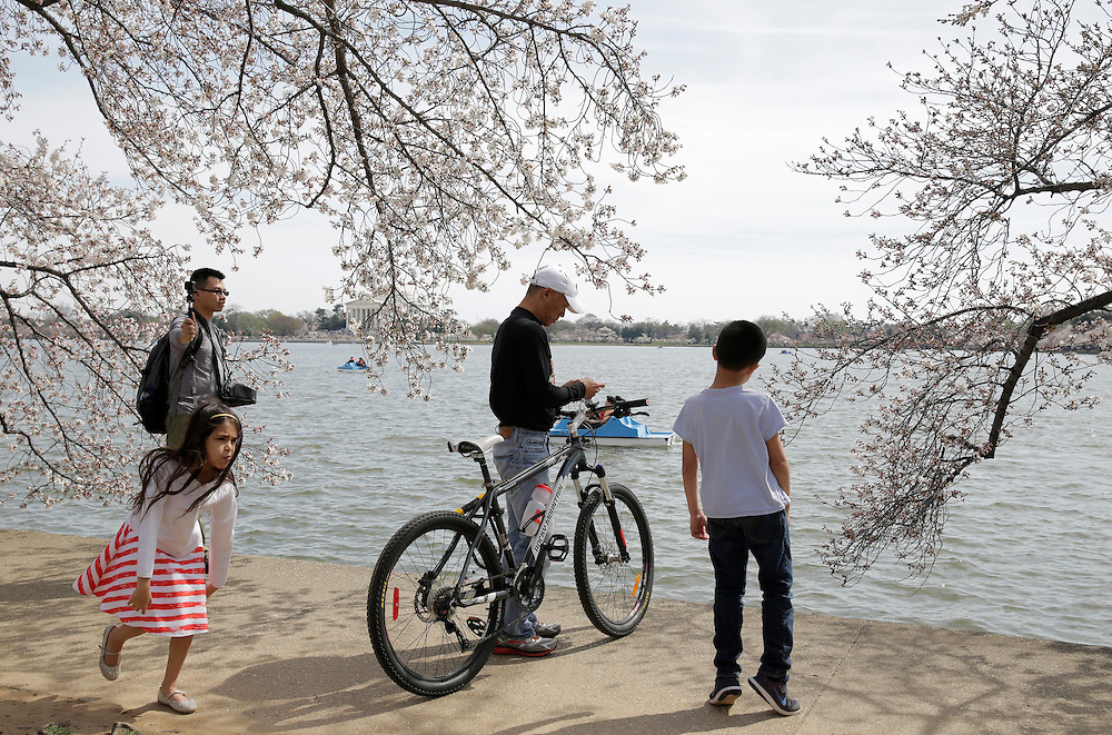 People walk under blooming cherry trees along the tidal bason in Washington March 23, 2016.      REUTERS/Joshua Roberts