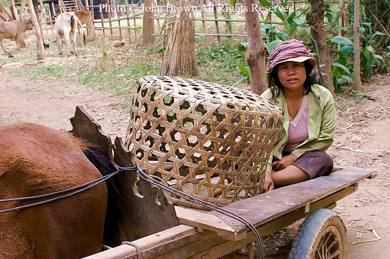 A woman tobacco worker is sitting on a horse drawn cart with a large basket in the rural village of Ban Russei, Cambodia. Ban Russei is an agricultural area of Cambodia well known for its cultivation of tobacco products as well as a variety of food including fruit and vegetables. This unindustrialized rural area is home to Muslims and Buddhists alike.