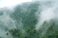 Cloudforest ,Braulio Carrillo National Park, Costa Rica.<br />