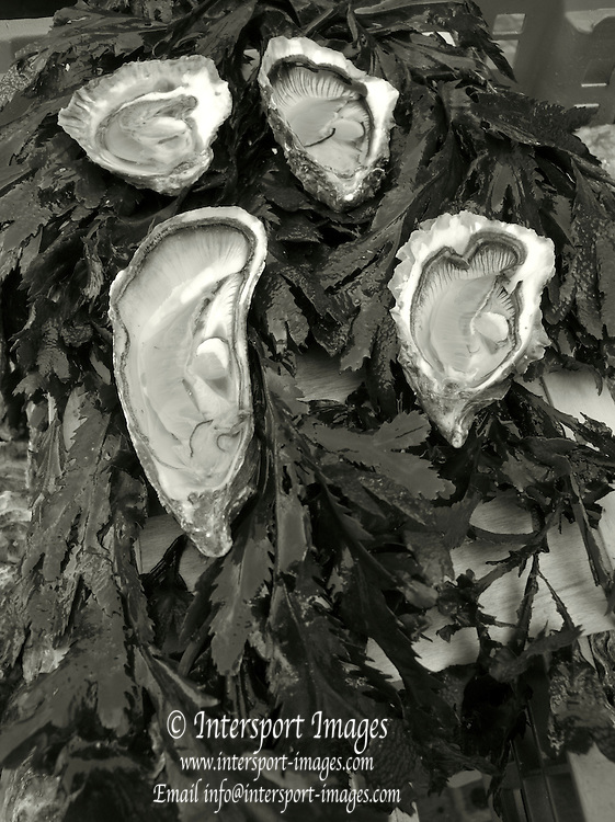 Rennes, FRANCE, Fresh Oysters, on display at the Saturday Morning Market,  Brittany.  Saturday  26/09/2009   [Mandatory Credit Peter Spurrier Intersport Images]. Street Photo.