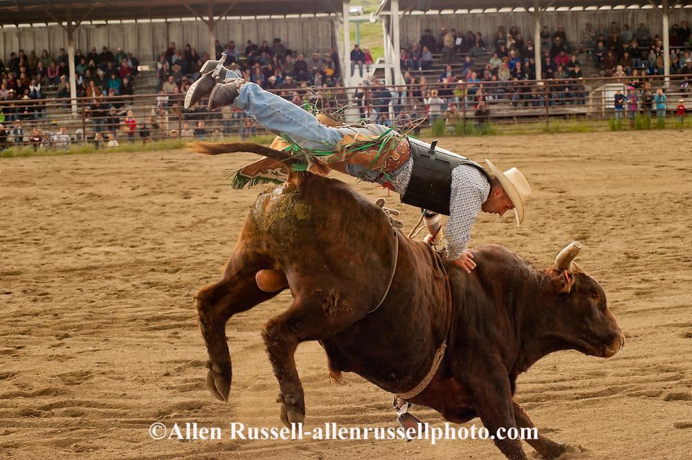 Bull Riding, rider dismounts, Wilsall Rodeo, Montana