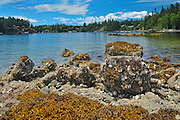 Oyster bed along the Sunshine Coast <br /> Pender Harbour<br /> British Columbia<br /> Canada