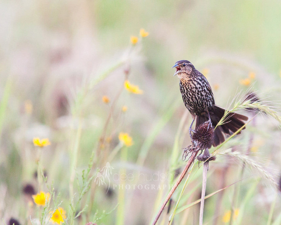 &quot;My Prairie!&quot;<br />