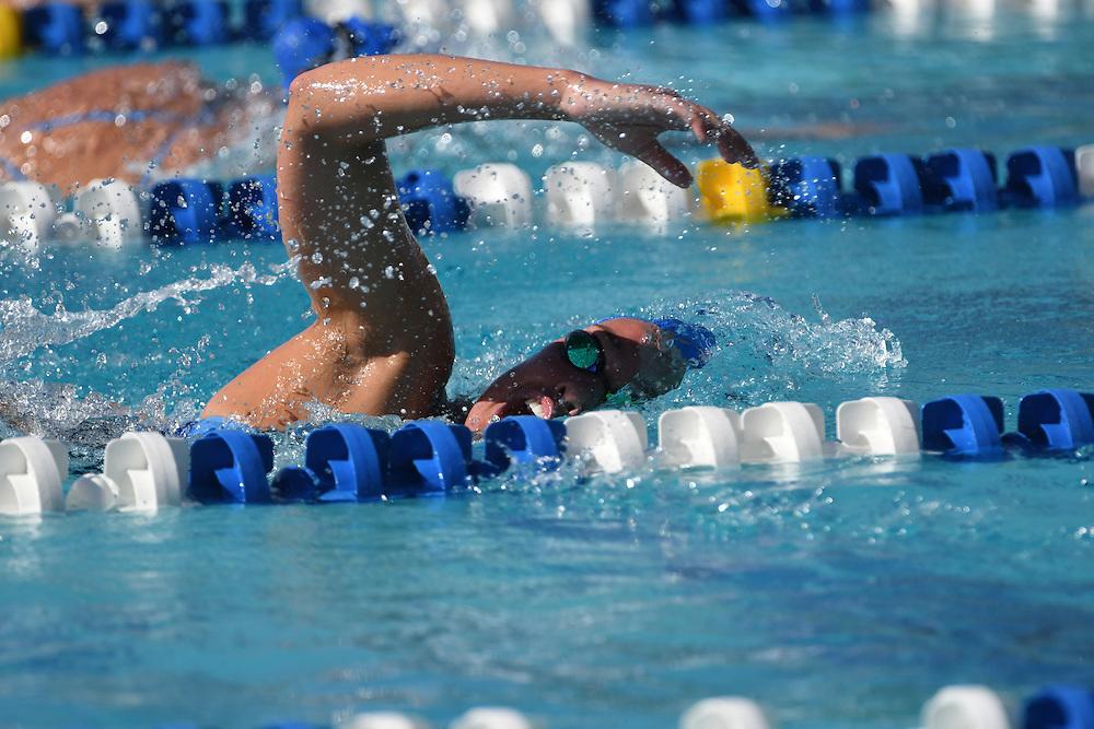 2017 Florida Gators Swimming @ All-Florida Invitational