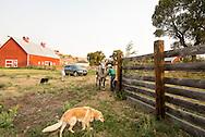 Ranch, cowgirl, saddling horse, barn, Montana