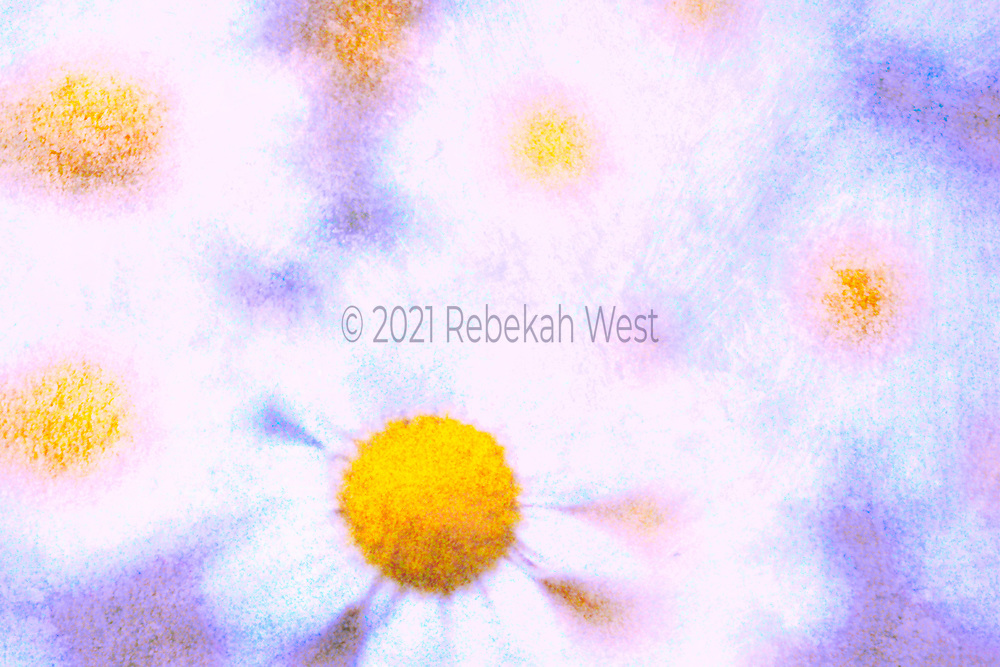 cheerful group of daisy faces with vivid orange and yellow centers blurred white petaled forms in horizonal field, between flowers are blue and violet accents, greenery under and over layers, greenery, flower art, feminine, high resolution, licensing, iridescent, horizontal, 5086 x 3391