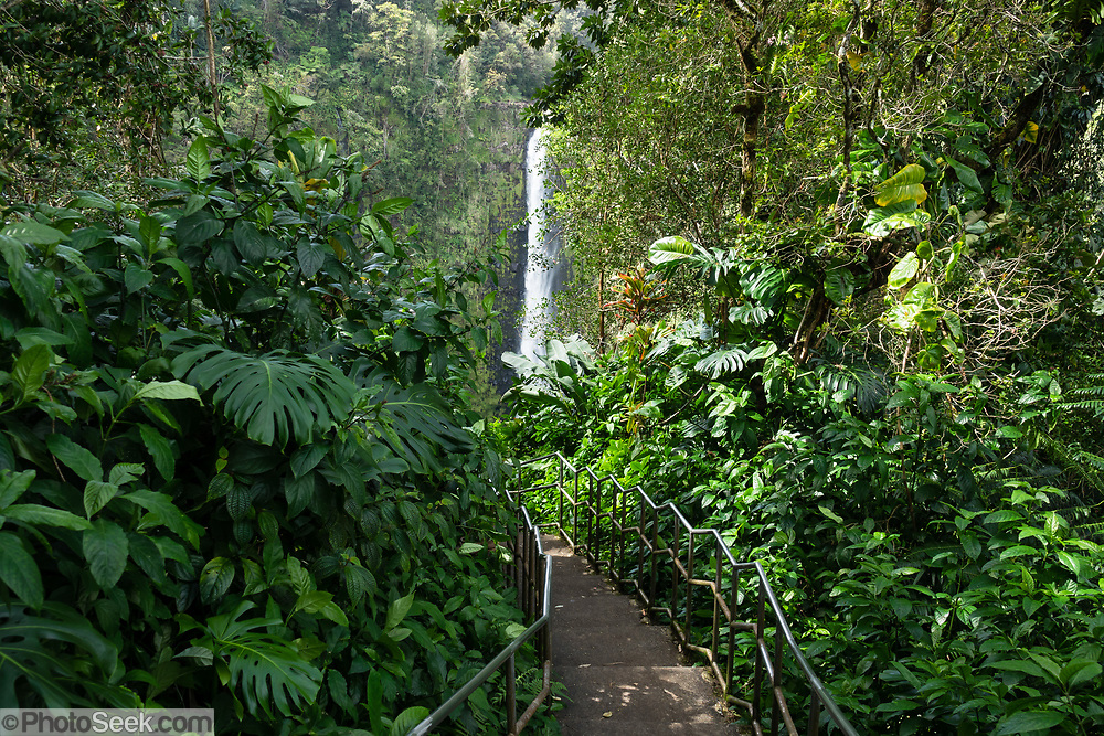 Akaka Falls State Park, Honomu, on the Big Island, Hawaii, USA. Along a loop trail of 0.4 miles, see the impressive 422-foot-high Akaka Falls along Kolekole Stream in a beautiful tropical landscape. It's the highest free-flowing waterfall in the state (though many others fall taller as cascades).