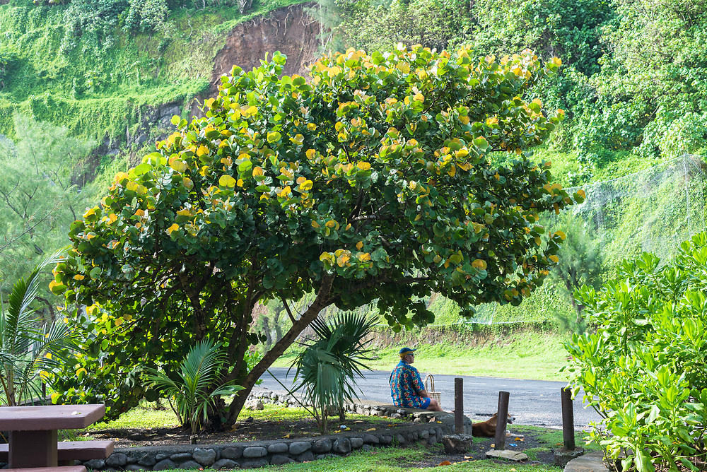 Papeete, Tahiti, French Polynesia -- March 18, 2018. A man sits by the road under a colorful tree and across the street from a mountain.  Editorial Use Only.