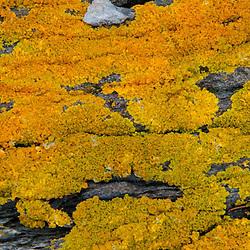 Rock Face Detail, Holbrook Island Sanctuary, Brooksville, Maine, US