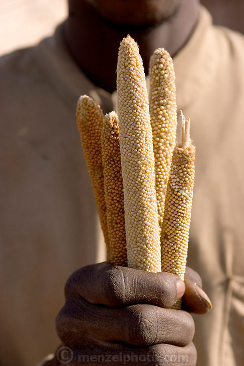A village farmer near the Breidjing Refugee Camp in eastern Chad, near the Sudan border, shows stalks of freshly harvested millet, a staple grain in this part of Africa. (Supporting image from the project Hungry Planet: What the World Eats.)