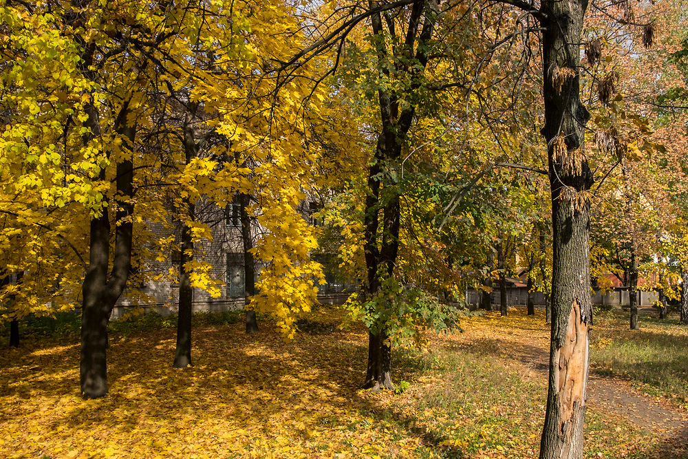 Tree leaves fall to the ground outside a bombed hospital in Donetsk.