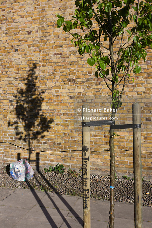 Bag of rubbish and young growing tree with its shadow on an estate brick wall.