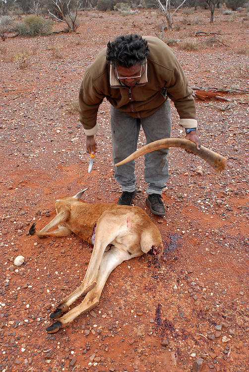 Bush Tucker, Kangaroo shoot - Local Aboriginal men, Isaac Green and Bradley Stokes, shoot roos for a feast at a Laverton sporting event. The tail is considered a delicacy. 09 September 2006