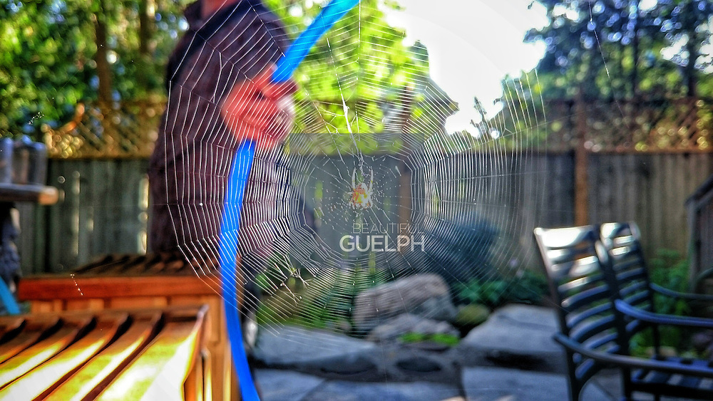 "Guelphonography 2015 finalist.  ""Summer Spins"" by Jen Turnbull"