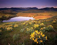 Meadows of Arrowleaf Balsam Root, Methow Valley Washington USA
