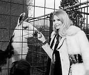 Miss Eva Rueber-Staier, Former Miss World from Austria and the World Wildlife Fund's 'Anniversary Girl', pets a llama during her visit to Dublin Zoo.<br />