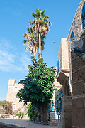 Israel, Jaffa, palm tree grows in a Narrow renovated alleyway in the artist colony in the old city
