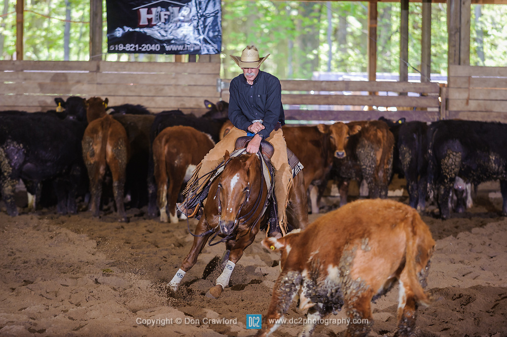 May 20, 2017 - Minshall Farm Cutting 3, held at Minshall Farms, Hillsburgh Ontario. The event was put on by the Ontario Cutting Horse Association. Riding in the Non-Pro Class is Steve Neville on Peppy Bag O Lena owned by the rider.