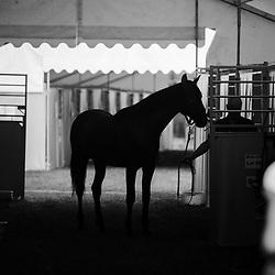 Inspections vente de yearlings Osarus trot, Hippodrome de Paris Vincennes, 24/08/2017, photo: Zuzanna Lupa