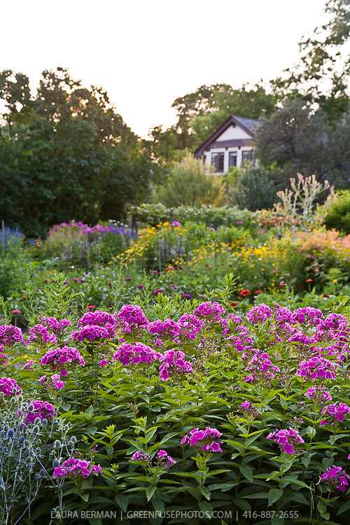 Perennial Flower Garden