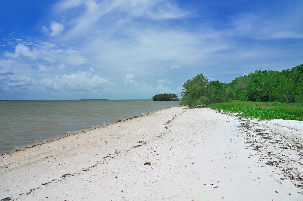 Mangroves, on tour with Everglades Area Tours, Everglades National Park, near Everglades City, Florida, USA