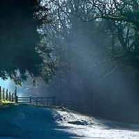 Sunlight shining through trees onto snow