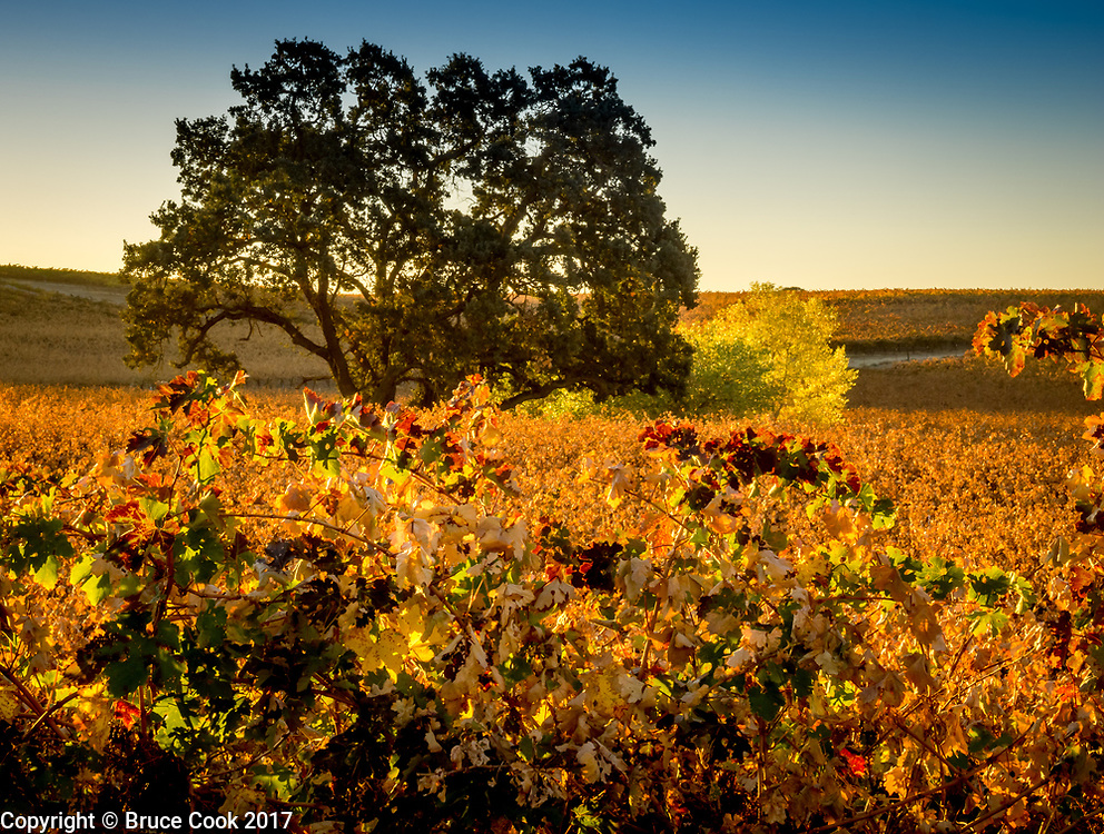 Sunrise Vineyard 4