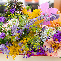 A mixed flower bouquet with cosmos, goldenrod, asters, dill, Queen Anne's Lace andother summer flowers