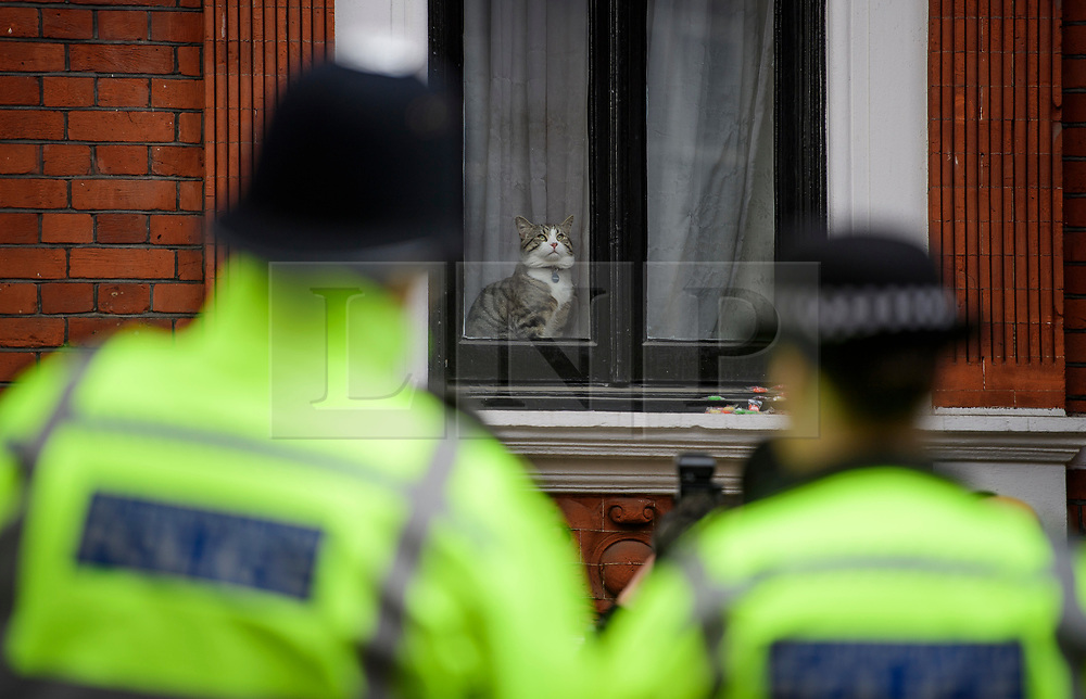 © Licensed to London News Pictures. 19/05/2017. London, UK. A cat belonging to Julian Assange called JAMES sits in the window of the Ecuadoran embassy in London where the Wikileaks founder has been living since 2012. Today the Swedish authorities have announced that they are dropping their investigation into rape allegations against him. Photo credit: Ben Cawthra/LNP
