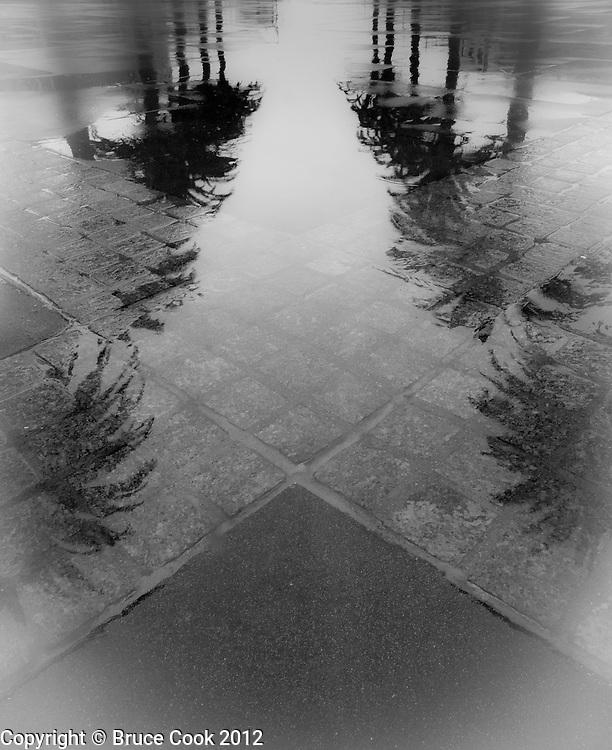 Palm, tree, reflection