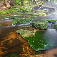 Foggy Shays Run in Blackwater Falls State Park, Davis, WV