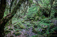 Moss covered surrounds on the Annapurna Dhaulagiri Trail, Nepal.
