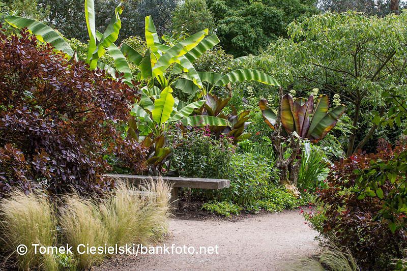 Summer border with bananas and ornamental grasses
