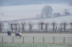 © Licensed to London News Pictures. 10/01/2019. Sidcup, UK. Horses grazing in a cold frosty field at Honeydale farm,Sidcup. Freezing cold weather this morning in South East London. Photo credit: Grant Falvey/LNP